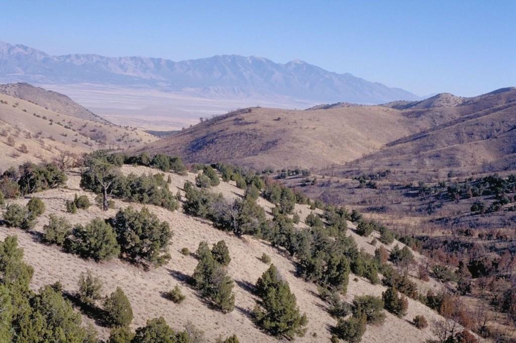 1280px-Cedar_Mtn_Wilderness